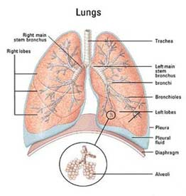 Asbestos health effects oracle solutions there are five main types of asbestos related diseases ccuart Choice Image