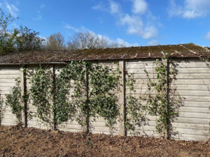 asbestos garage roof removal